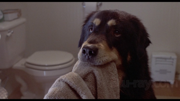 Kenapa sih Anjing Suka Banget Ngikutin Kita Ke Mana-mana?